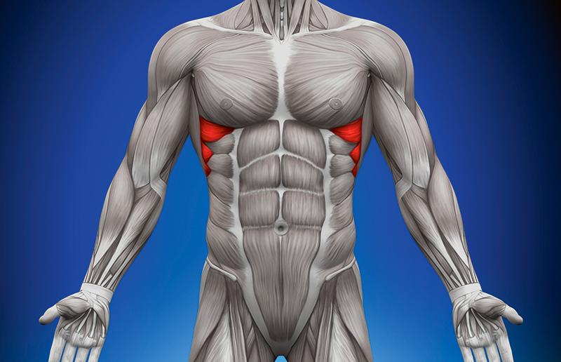 临床上偶尔会遇到胸部侧面疼痛的病人,其中有一大部分是前锯肌劳损所引起。