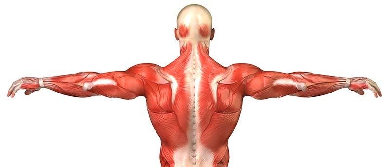 痛 下方 右 肩胛骨