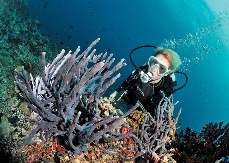 1小时浮潜 US$120 Resort位处全马尔代夫出名最美的潜水位之一,这个深8米的Blue Hole更是浮潜胜地,可分别穿过12米及18米的珊瑚洞看魔鬼鱼和海龟!
