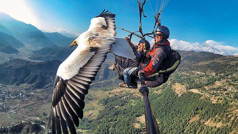 每年10至4月因为天晴日子较多,比较适合飞行,5至9月则会休息,让秃鹰领航员换羽毛。